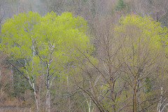Looking Back At Spring (maureen.elliott) Tags: trees green spring algonquinpark nature growth