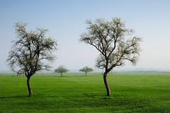19040403 (felipe bosolito) Tags: tree pair green blue morning spring geometry twin fuji xpro2 xf1655 velvia