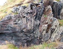 Folded Rock (R~P~M) Tags: rock slate shale fold cliff coast cornwall kernow boscastle england uk unitedkingdom greatbritain