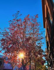 """City Light"" (bradhodges09) Tags: fall2018 fallcolor fall autumn2018 autumncolor autumn architecture suburbanexploration bluesky redmaple city sunflare sunbeams sunlight sun"