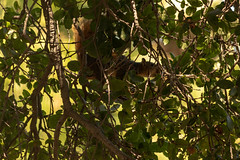 La Brea, Los Angeles 2018/9 (grimneko) Tags: anyvision b california f l labrea labels losangeles p t usa w branch fauna flora leaf plant tarpits tree wildlife unitedstates exif:focallength=214mm camera:model=canoneos7dmarkii camera:make=canon exif:lens=efs55250mmf456isii geo:location=centralla geo:state=california geo:city=losangeles geo:country=unitedstates geo:lon=11835817666667 exif:aperture=ƒ56 exif:model=canoneos7dmarkii exif:isospeed=500 geo:lat=34064535 exif:make=canon