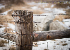 Wrapped Tight (HFF) (13skies) Tags: snow pov winter fence outdoors colder wirefence woodenpost sonyalpha99 hff fencefriday country happyfencefriday corner barrier privateproperty no notrespassing keepout