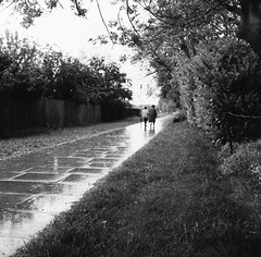 Shrubbery Walk Basingstoke, 1981 (Cross Duck) Tags: ilfordpanf basingstoke oldbasingstoke oldphotograph blackandwhite monochrome mediumformat ilfordfilm rain rainyday mamiyac220 mamiyaflex