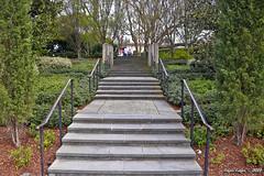 IMG_5605 (Roger Kiefer) Tags: dallas arboretum outdoors beauty nature landscape
