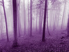 purple wood (Toni_V) Tags: iphone xr iphoneography fog nebel mist photoshop wald forest uetliberg winter hiking wanderung zurich zürich switzerland schweiz suisse svizzera svizra europe ©toniv 2018 181225 weihnachten purple violett landscape wood