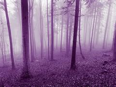 purple wood (Toni_V) Tags: iphone xr iphoneography fog nebel mist photoshop wald forest uetliberg winter hiking wanderung zurich zürich switzerland schweiz suisse svizzera svizra europe ©toniv 2018 181225 weihnachten purple violett landscape wood