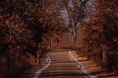 St. John's Road at St. Croix State Park, Minnesota in Autumn (Tony Webster) Tags: minnesota saintcroixstatepark saintjohnsroad stcroixstatepark stjohnsroad autumn dirtroad fall longlens road snow statepark trees winter crosbytownship unitedstates us