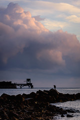 渚に佇むーStanding on the beach (kurumaebi) Tags: yamaguchi 秋穂 山口市 nikon d750 nature landscape 雲 cloud autumn 秋 sky 空 sea 海 birds 鳥 アオサギ heron