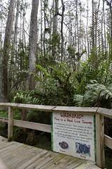 DSC6849 (Starcadet) Tags: orlando alligator krokodil gator gatorland florida glades sumpf zoo hunger tiere fressen nilkrokodil aufzuchtstation