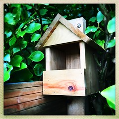 Bird Box (Julie (thanks for 8 million views)) Tags: hipstamaticapp iphonese garden birdbox nestbox wooden fence foliage griselinia 2019onephotoeachday squareformat 100xthe2019edition 100x2019 image9100
