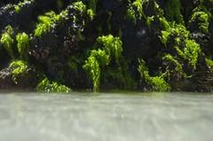 Algas (mcvmjr1971) Tags: red arraial do cabo rio janeiro verão 2019 aguas verdes azuis nikon outex tokina d7000 lens 1116mm f28 mmoraes