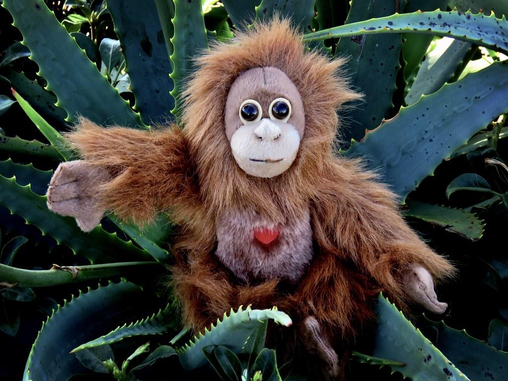 Meet Karen, baby Orangutan
