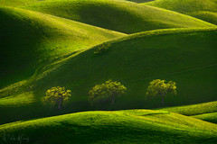 Ridge Trio (Willie Huang Photo) Tags: hills green rollinghills california foothills oak trees light shadow spring curves landscape nature scenic