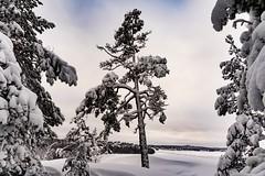 Vinter frihet (stbea101) Tags: fs190203 sverige sweden stockholm