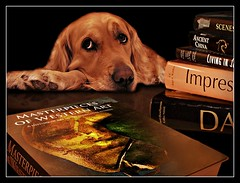 Tag (patrick.verstappen) Tags: dog pet animal verstappen belgium perro photo picassa pinterest pat ipernity ipiccy image imagine gingelom google flickr facebook hund drôle rue gens chien gracioso calle gente gata веселая люди via populus canis xxx texture textured yahoo nikon hdr hond twitter textuur sigma winter january phototrick lovely tags tag love beautiful life smile sweet pretty home model diy happy code cute instagram funny books lucy public lol test