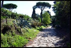 Roma - Appia Antica (claudiobertolesi) Tags: road ancientrome roma 2018 nikond610 appiaantica claudiobertolesi selciato strada roman pine green shadows archeology italy lazio