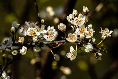 Spring (betadecay2000) Tags: germany deutschland mecklenburgvorpommern deutsch german spring april frühling bäume landschaft zarrentin schalsee ostdeutschland landscape baum