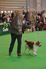 Diary_2016_033 (evinrisca) Tags: crufts welsh springer spaniel dogshow wsscsw