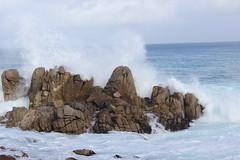 IMG_9792 (mudsharkalex) Tags: california pacificgrove pacificgroveca