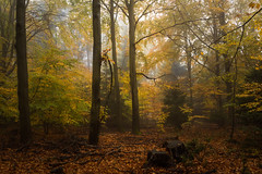 Lucky to be (Petr Sýkora) Tags: les mlha podzim nature forest autumn colorful fog trees czech