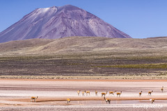 Peru Set Two - 3 (burntpixel.ca) Tags: perun south america southamerica latin photo photograph rural fine art patrick mcneill burntpixel beautiful amazing landscape canon 50d canon50d travel trip wander adventure journey overseas animals mammals vicuna llama alpaca volcano herd