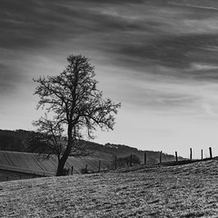 Windrather Höhen (Velby) Tags: landscapes blackwhite blackandwhite bäume tree field bw