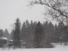 Snow Snowing Trees Forest Bavaria Germany © Es schneit Schnee Bayern Oberbayern Wald Baum © (hn.) Tags: bavaria bayern de deutschland eu europa europe flocken gaisach germany jahreszeit landkreisbadtölzwolfratshausen nadelbaum oberbayern schneeflocken season winter baum copyright copyrighted esschneit flakes forest furtree heiconeumeyer itsnows schnee schneien snow snowflakes snowing tosnow tree wood