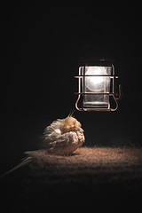 Rip my sweet love 🌹🌹🌹 yassmin 🌹🌹🌹 (jassim madan) Tags: bahrain yassmin jassimmadan art home national artseek jassim madan nikkor nikon outside bird portrait light people flickr orange blackandwhite bw explore the commons photography weekly theweeklyflickr theweekly worldwide flickrfriday photographer spotlight beautiful top