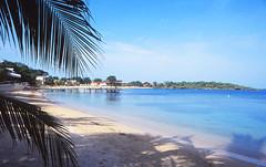 Half Moon Bay, Roatan (Niall Corbet) Tags: honduras caribbean beach roatan island sea palm coast