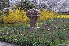 IMG_5634 (Roger Kiefer) Tags: dallas arboretum outdoors beauty nature landscape