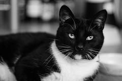 Schubertino (thisoneiscrazy) Tags: helios 44m4 canon 450d cat bw black white photos