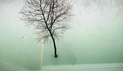 Le retour de l'homme-tronc (Robert Saucier) Tags: québec quebeccity plainesdabraham neige snow hiver winter arbre tree reflet reflection img5269 vudenhaut plongée