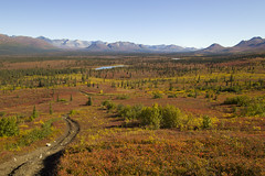 Wolf Point trail (JR-pharma) Tags: alaska usa united october northwest north west automne fall states america roadtrip road trip photoroadtrip hiking hike 2015 french français nature aventure liberty liberté canoneos6d canon6d mark 1 canon eos 6d classic jrpharma denalihighway denali highway