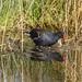 RSPB Buckenham Marshes