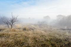 vlieland dune valley caught in the fog (hein van houten) Tags: fog misty foggy dune dunes dunevally duinvallei morning morningwalk vlieland sky mistymorning kooispleklid kooisplek pinetrees