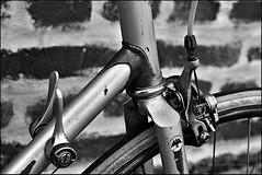 Bertin_SAS_6754 (SAS Photographie) Tags: vélo fahrrad cycle rennrad racebike vélodecourse vélocourse classic vintage bicycle schwarzweiss blackandwhite noiretblanc nikon d610 afs nikkor 2470 28 gimp darktable geeqie