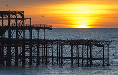 Sun Seen Setting From Hove's West Pier (grahambrown1965) Tags: hove sun sunset pier westpier sussex eastsussex water sea bird birds gull gulls seagull seagulls orange yellow pentax k5iis pentaxk5iis 60250mm starlens brighton smcpentaxda60250mmf4edifsdm flight flying wintersun winter pentaxart justpentax smcpda60250mmf4edif