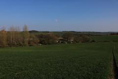 brill walk-190401-32.jpg (Phil Mercer-Kelly) Tags: sunshine spring radiooxford bbc counyryside blossom philmercer getactive brill sheep buckinghamshire europe england uk oxfordshire views bucks health windmill walker oakley walk