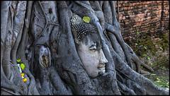 _SG_2018_11_0812_IMG_5559 (_SG_) Tags: bangkok suvarnabhumi holiday citytrip four cities asia asia2018 2018 capital thailand city ayutthaya temple phra nakhon si historical park wat sanphet