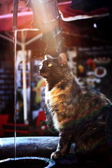 The Cat and the Water (Christian Chene Tahiti) Tags: canon 6d rhodes grèce puits chat water cat eau filet travel voyage