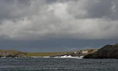 Windy (Anders_3) Tags: vigdel sola rogaland norge norway jæren jærstrendene beach nature landscape helicopter weather wind cabin nikon northsea sky 7s64940v2 field cows