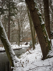 Elswout 2019: From between the trees (mdiepraam) Tags: elswout 2019 haarlem trees snow cabin brook ice