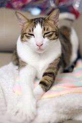 Jim (Steve only) Tags: fujifilm xpro1 fujinon xf 35mm f14r f14 3514 cats jim
