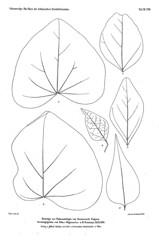 beitrgezurpal02wien_0205 (kreidefossilien2) Tags: velenovský bohemiancretaceousbasin bohemian czech republic palaeobotany flora kieslingswalde