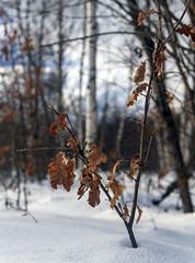 Winter forest / Зимний лес (dmilokt) Tags: природа nature пейзаж landscape лес forest дерево tree снег snow dmilokt dof nikon d850