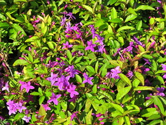 IMG_0117 (mohandep) Tags: iimb events birding nature wildlife flowers insects butterflies trees plants ugs aircraft