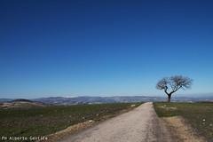 l'ultimo testimone del bosco (albygent Alberto Gentile) Tags: sly campagna countryside country canon6dmarkii albero terra puglia italy cielo tree
