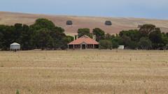 0419 Farm @ Redhill (Crystal Brook) (roving_spirits) Tags: australia australien australie southaustralia