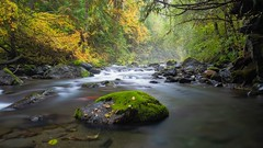 A moment in time (Matthew James Lewis) Tags: washingtonstate water washington rocks color cedertrees beauty bigquilvalley bigquilceneriver moss mapletrees aldertrees longexposure light landscape leaves olympicpeninsula olympicnationalforest mist vinemaple