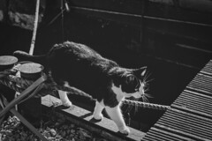 Cat from the river ... (Julie Greg) Tags: animal cat street bw monochrome canon